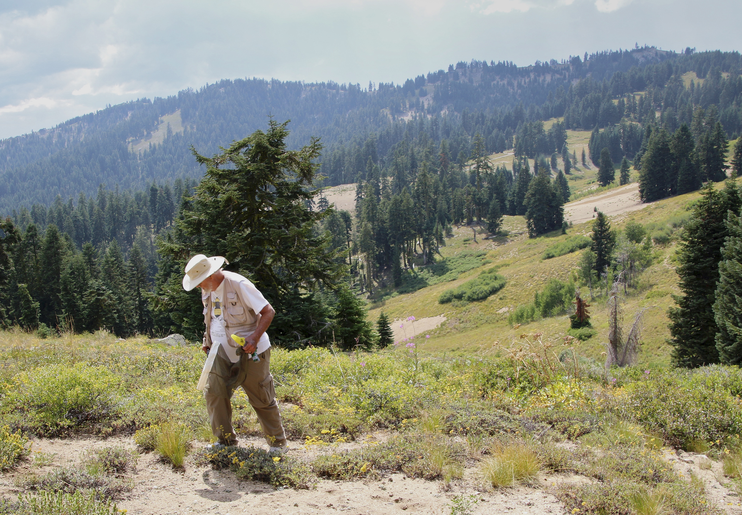 Robin Thorp hunting for Franklin's bumble bee on Mount Ashland in Southern Oregon. (c) Paige Embry