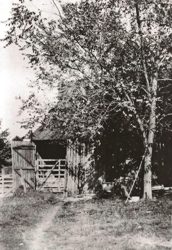 A black walnut shades the barn at Rocky Ridge Farm. Courtesy Herbert Hoover Presidential Library.