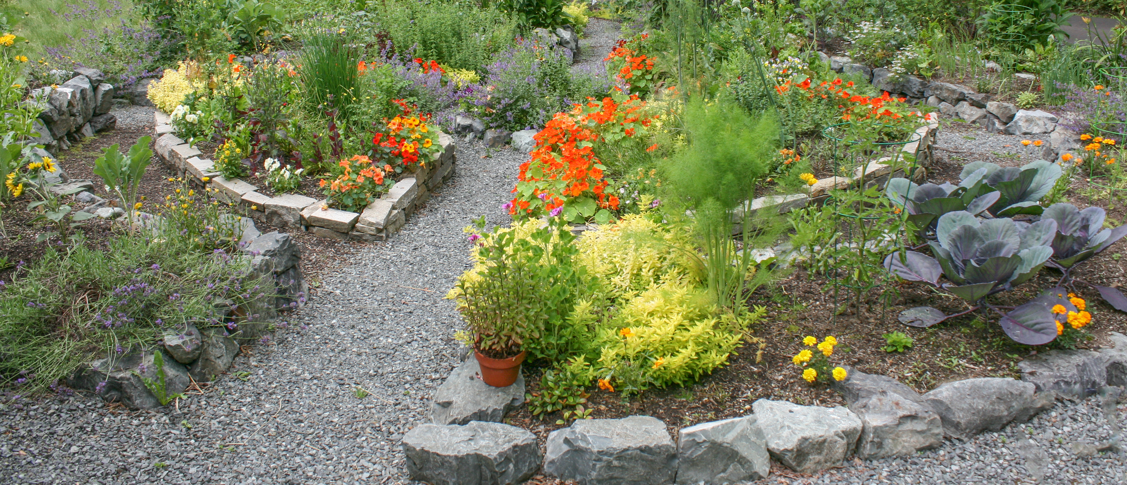 A cultivated garden pathway.