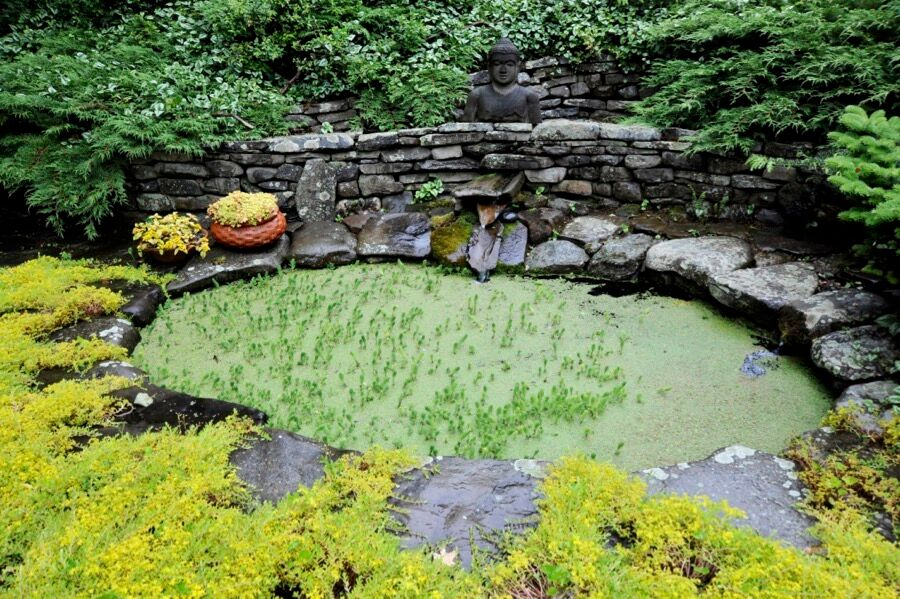 Out the window: The larger of two garden pools, with Sedum blooming in the paving cracks, seen after a summer rain.