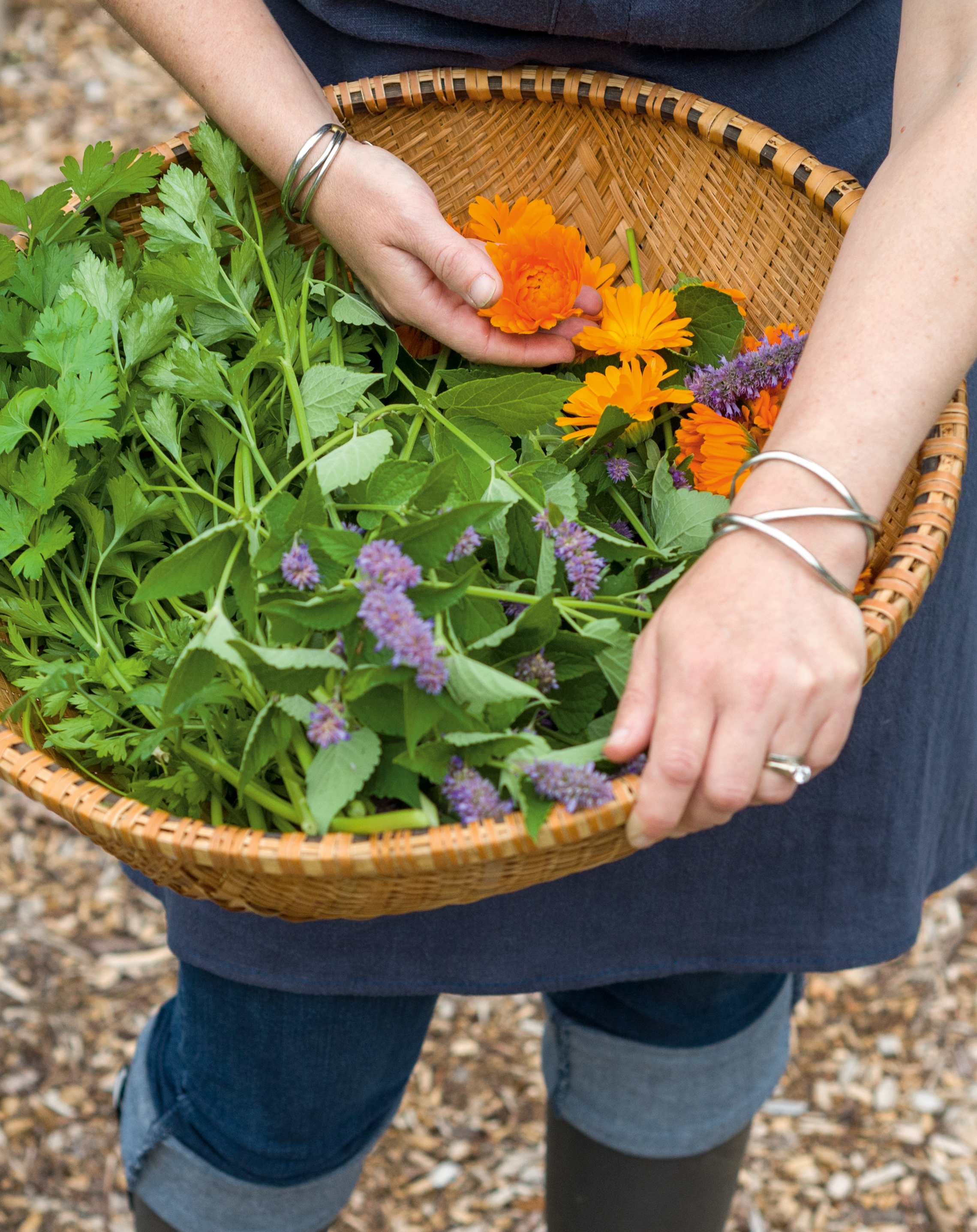 A basket of freshly picked herbs being held in someone's forearms.